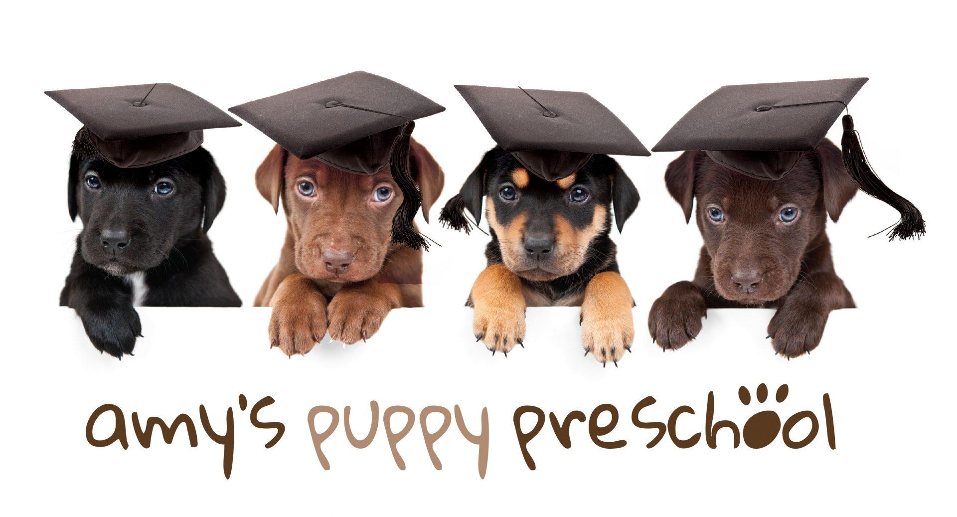 Amy's Puppy Pre School